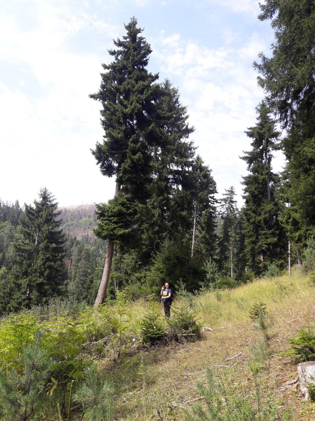 Arjevanidze Wood