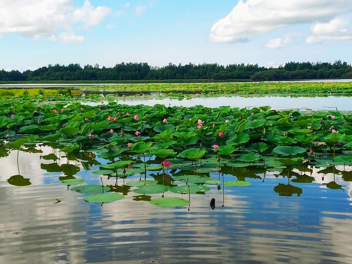 Озеро Лотосов Галкино